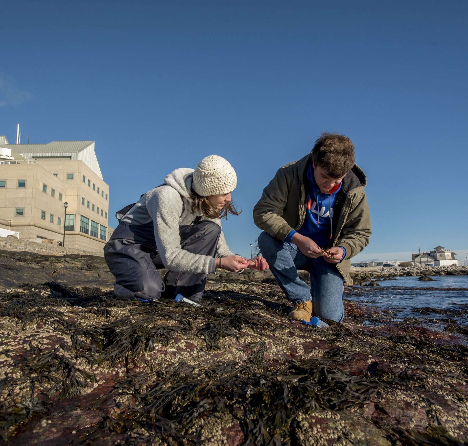 Chris Mills '18 Marine Science, and Assistant Professor Catherine Matassa working on a research project at UConn Avery Point on Nov. 29, 2018. (Sean Flynn/UConn Photo)
